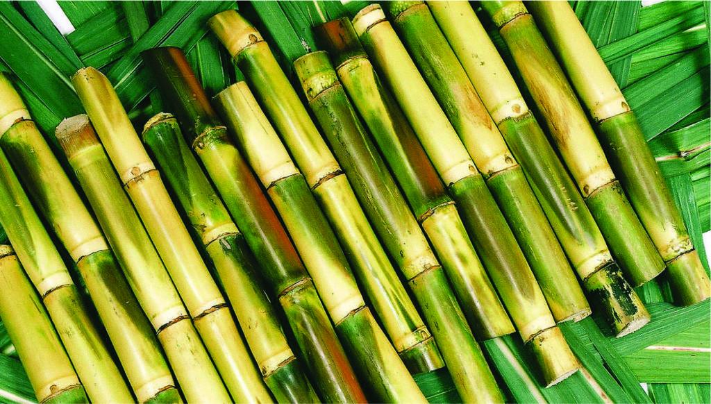 nagrafarm-sugarcane-farming
