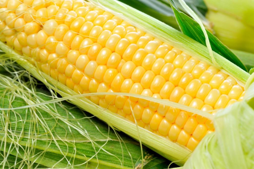 nagrafram-maize-corn-in-india