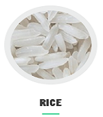 rice_at_nagra_farms